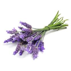 Lavender makes the most popular essential oil
