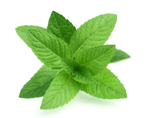 Peppermint makes amazing essential oil